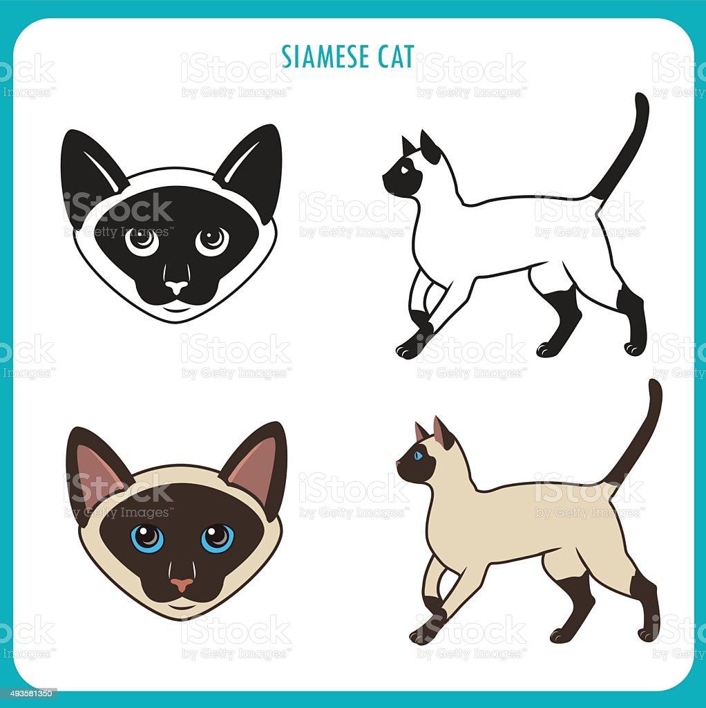 Gatto Siamese Set Viso E Corpo Immagini Vettoriali Stock E Altre