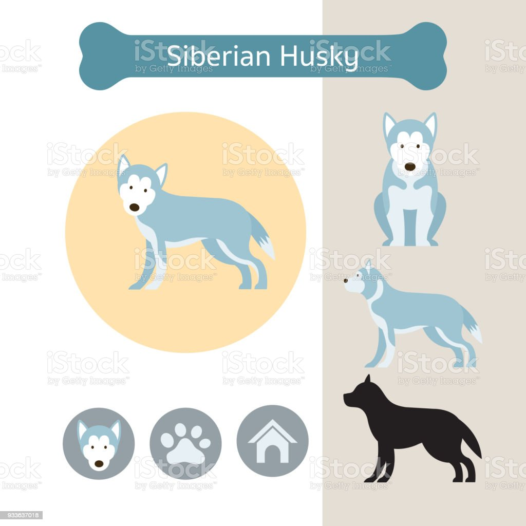 Siberian Husky Dog Breed Infographic Stock Vector Art & More Images ...