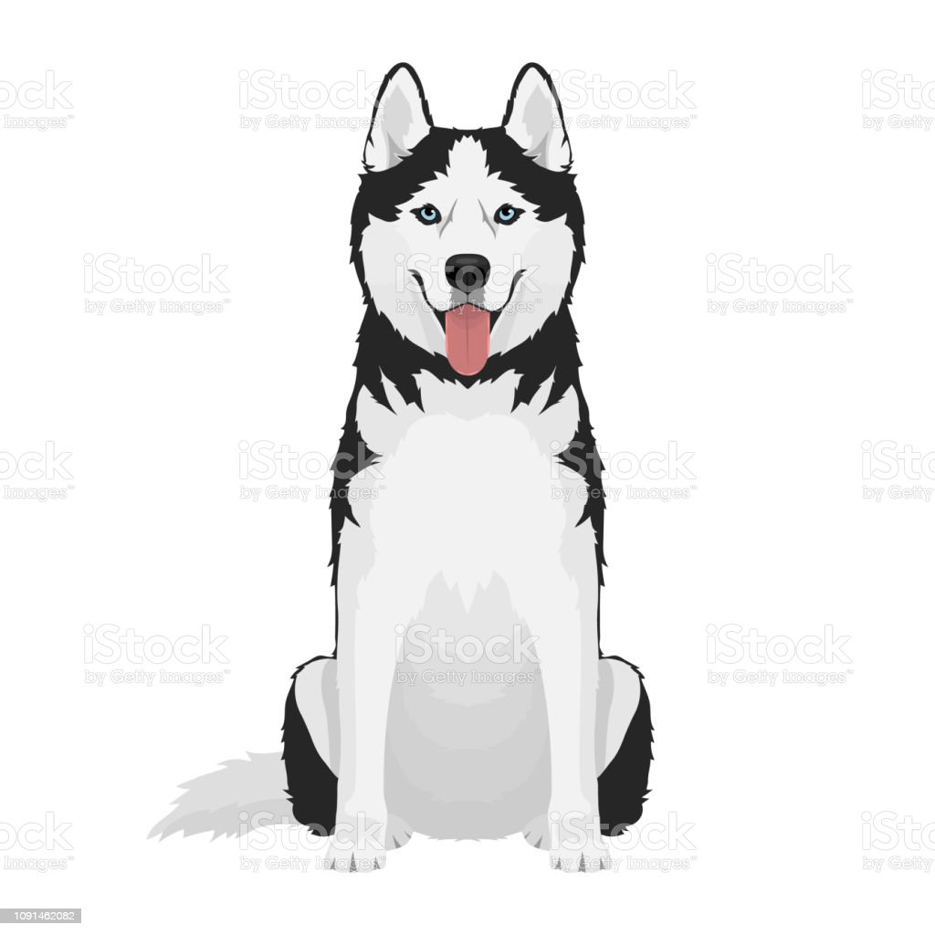 Siberian husky dog vector art illustration