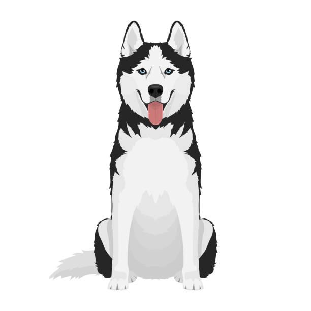 ilustraciones, imágenes clip art, dibujos animados e iconos de stock de perro husky siberiano - ojos azules