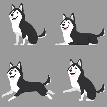 Siberian husky in different poses.