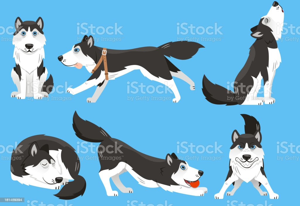 Siberian Husky Purebred Dog Kennel Pup Puppy Stock Vector Art & More ...