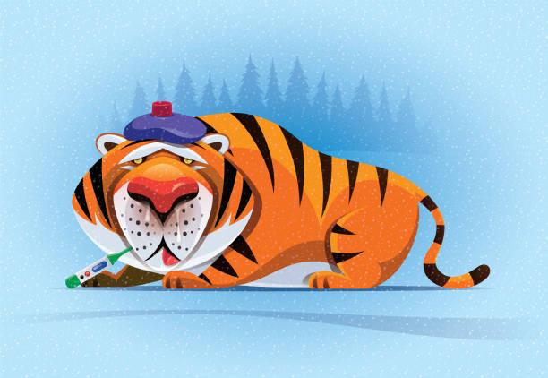 illustrazioni stock, clip art, cartoni animati e icone di tendenza di sick tiger with thermometer and ice pack - china drug