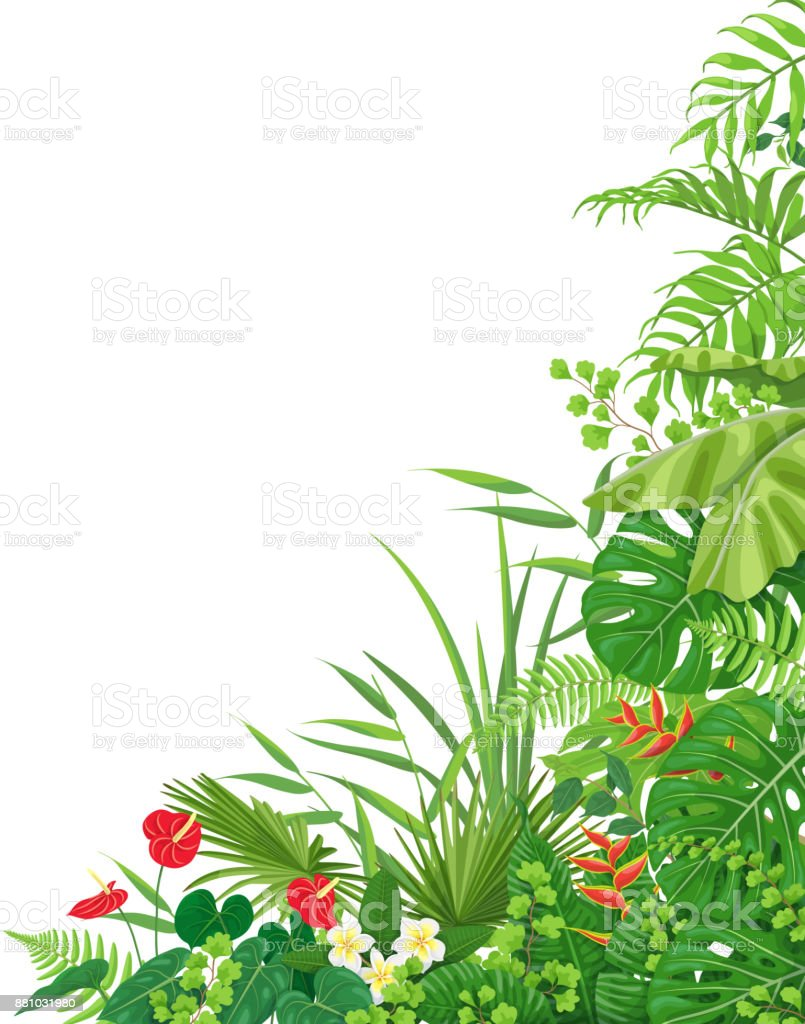 Side Corner  Border  with Tropical  Plants vector art illustration
