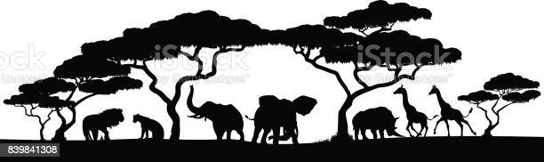 Silhouette african safari animal landscape scene vector id839841308?b=1&k=6&m=839841308&s=612x612&h=na77d5cif8l udlesmm2pdewe8cy2gmur 6morwx5h0=