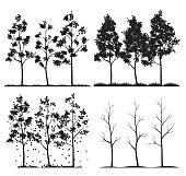 Vector Silhouette Birch Trees