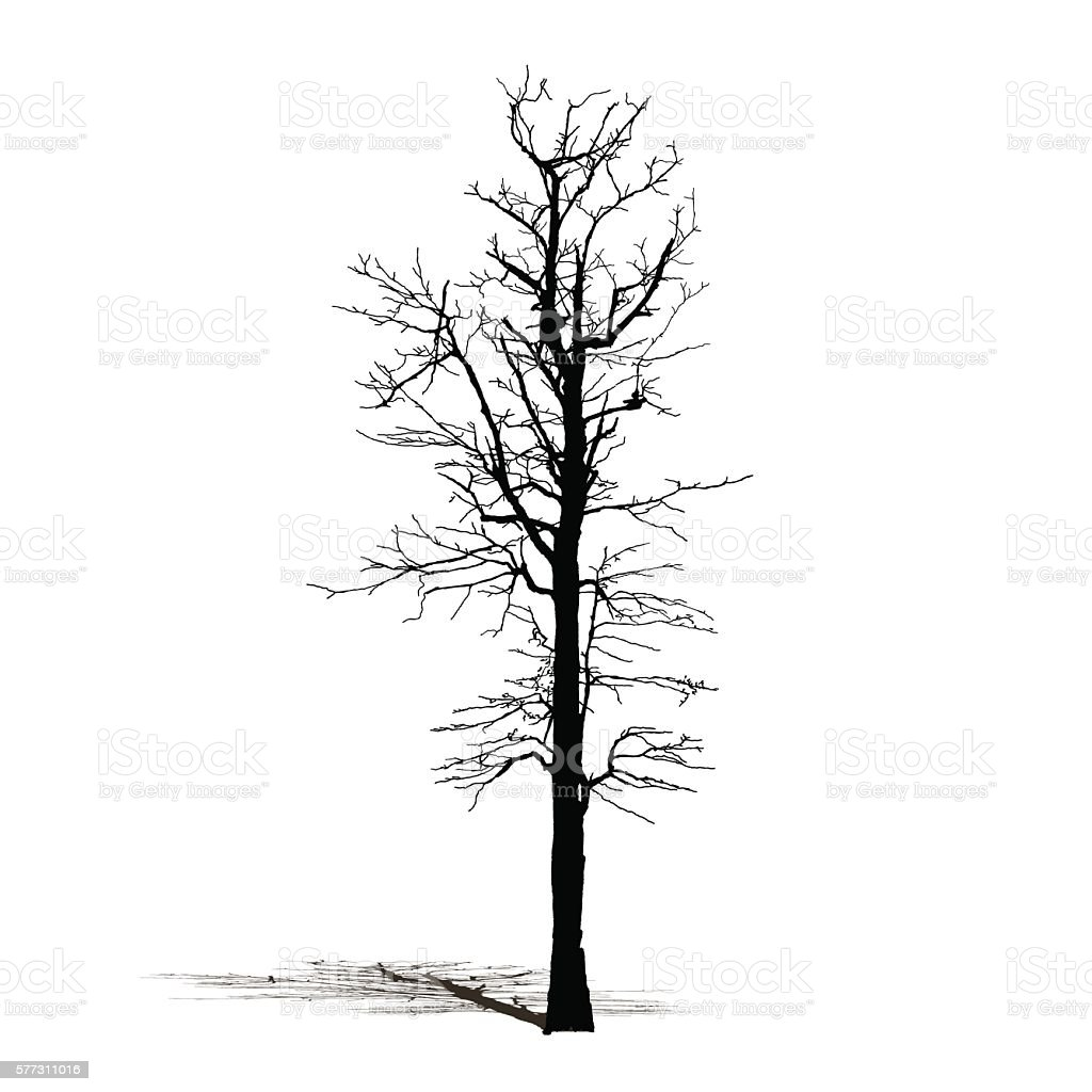 silhouette black dead tree natural plant sign vector illustration rh istockphoto com dead tree branch vector dead tree vector image