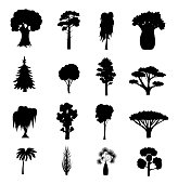 Silhouette Black Different Tree Types and Name Include of Elm, Birch, Eucalyptus, Cedar, Dracaena, Oak and Pine Icons Set. Vector illustration of Various Type Wood