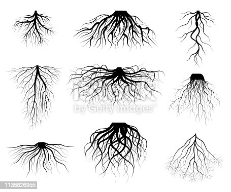 Silhouette Black Tree Roots Various Types Shapes Set Underground Element of Plant for Web and App. Vector illustration