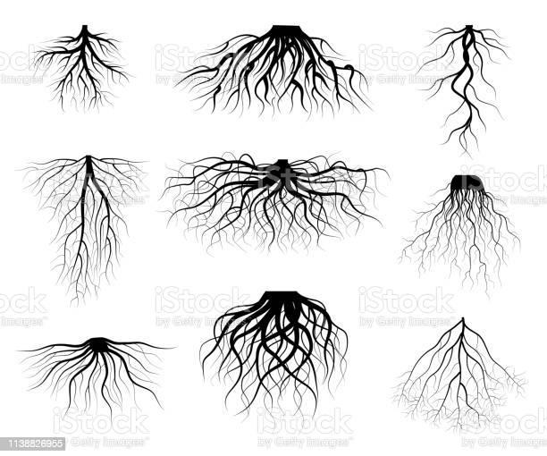 Silhouet Zwarte Boomwortels Verschillende Soorten Vormen Set Vector Stockvectorkunst en meer beelden van Applicatie