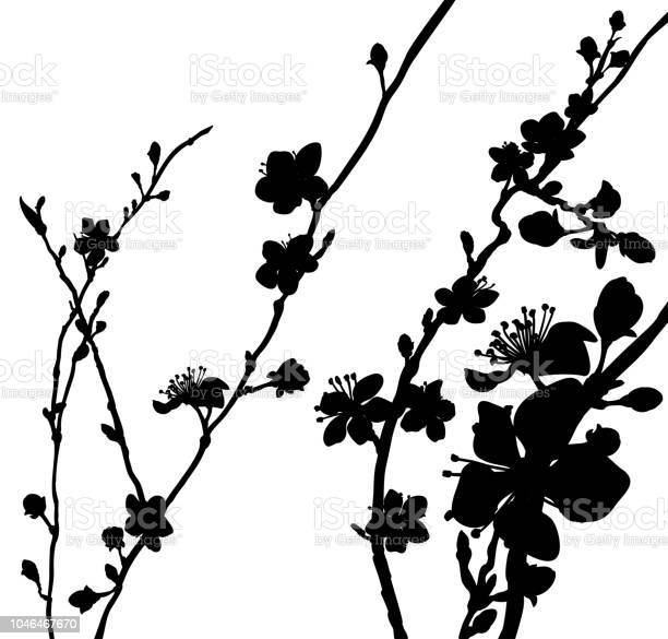 Silhouette blossom flowers background pattern vector id1046467670?b=1&k=6&m=1046467670&s=612x612&h=dp1sw1o53pwjr9tertj49xgjjgdn12byvnglzgfhi g=