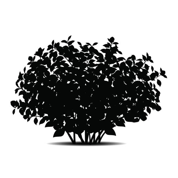силуэт bush с листьями и shadow - куст stock illustrations