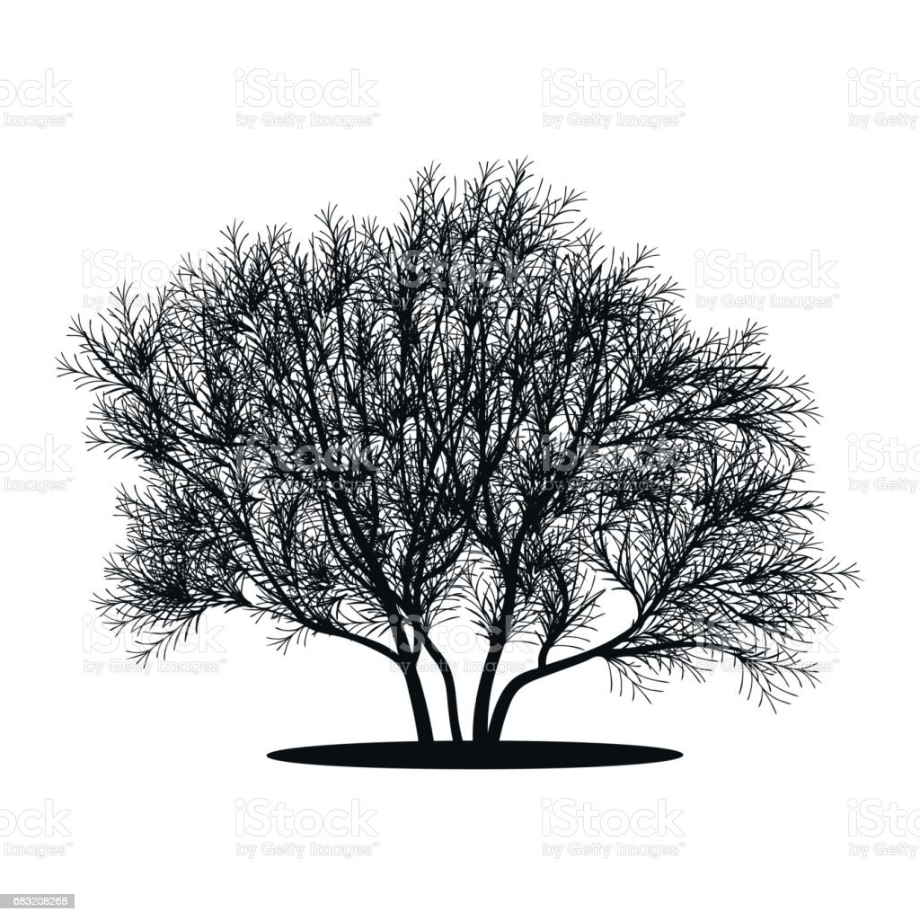 silhouette bush with leaves and shadow royalty-free silhouette bush with leaves and shadow stock vector art & more images of abstract