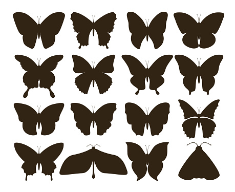 Silhouette butterflies. Simple collection of hand drawn black tattoo shapes, vintage insect set. Vector butterfly drawing