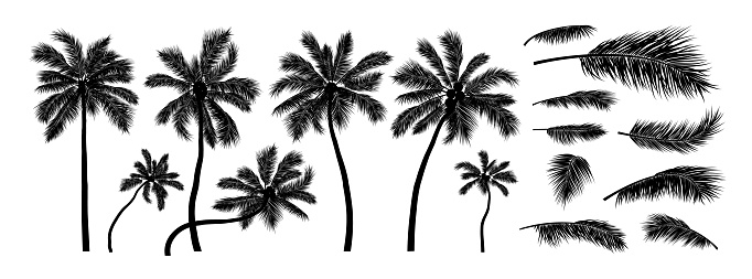 Silhouette coconut tree on white background vector illustration