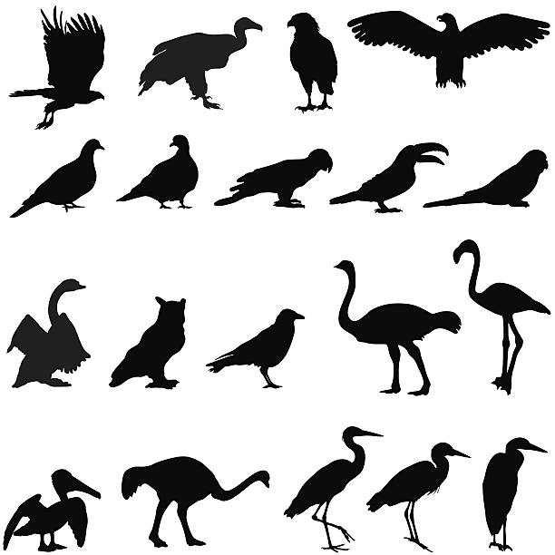 Silhouette collection of birds Silhouettes of birds including an eagle, crow, owl, hawk, vulture, budgie, toucan, parrot, pelican, flamingo, ostrich, pigeon,swan, and a heron. heron stock illustrations