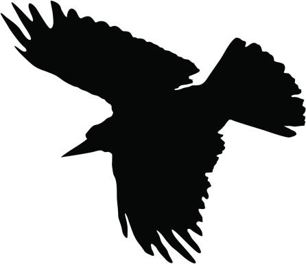 silhouette crow