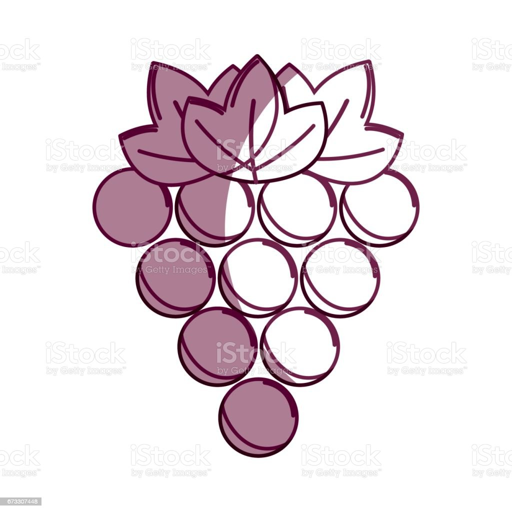 silhouette delicious grape healthy fruit royalty-free silhouette delicious grape healthy fruit stock vector art & more images of agriculture