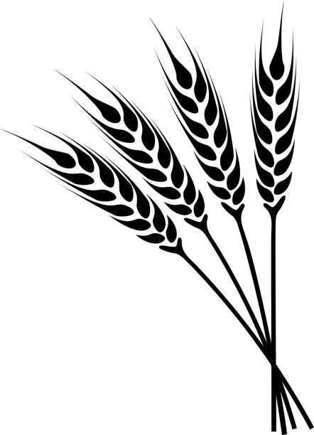 silhouette ears of wheat icon - plant stem stock illustrations