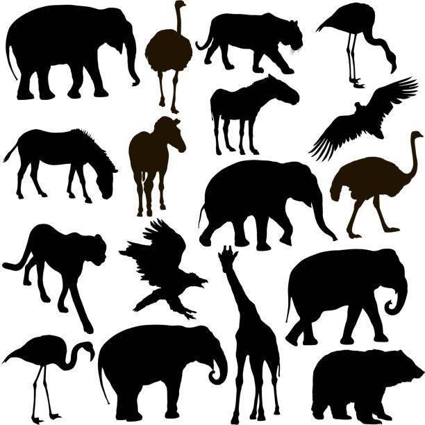 silhouette elephant tiger bear giraffe flamingo pelican goose on a white background - elephant stock illustrations