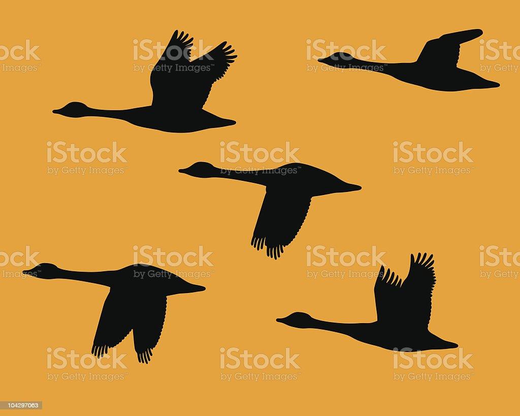 Silhouette troupeau d'oies - Illustration vectorielle