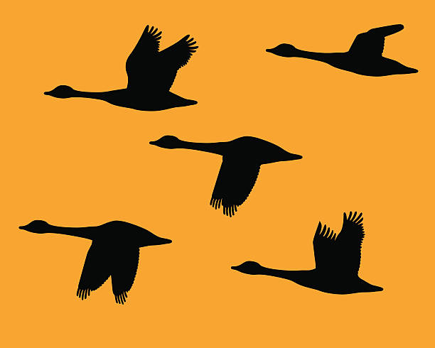 Silhouette flock of geese  canada goose stock illustrations