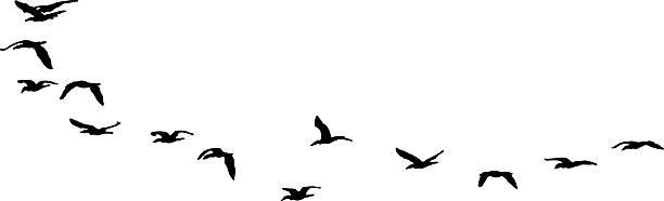 シルエットを飛ぶ鳥の一群の海。に隔てられたホワイト - 鳥点のイラスト素材/クリップアート素材/マンガ素材/アイコン素材