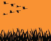 Canada Geese. I Love Canada! Vector illustration.
