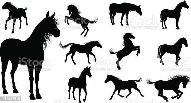 Silhouette horses vector id482887618?b=1&k=6&m=482887618&s=612x612&h=tpka0ab7hkotjd6p8ir 9vznfnfevsomgcigclsnmau=