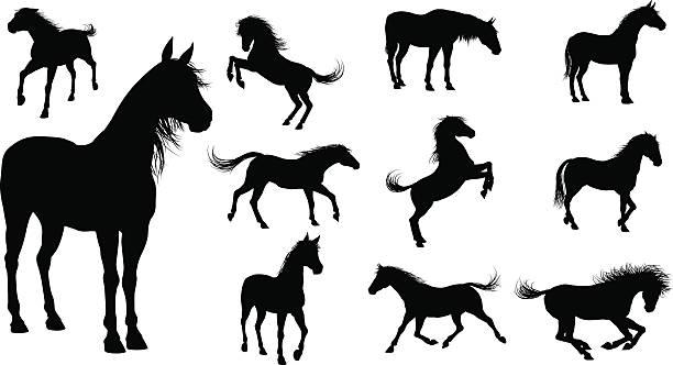 ilustraciones, imágenes clip art, dibujos animados e iconos de stock de silueta de caballos - caballo