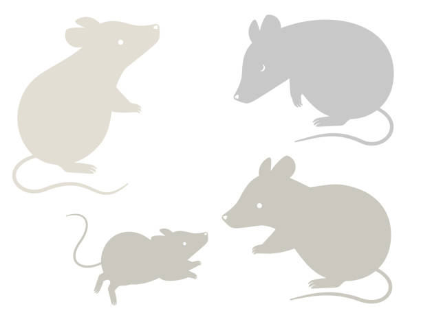 Silhouette illustration set of mice in various poses This is a silhouette illustration set of mice in various poses (looking up, bowing, parent and child facing each other). suave stock illustrations