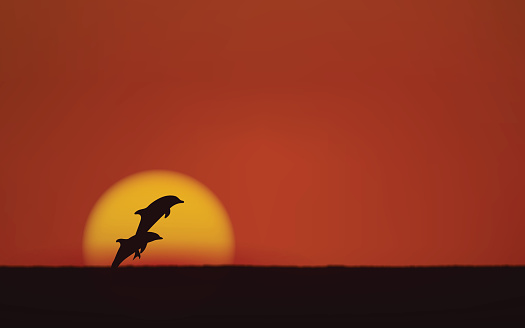 Silhouette jumping dolphin in flat icon design with sunset sky background