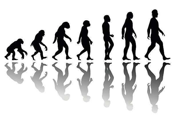 sylwetka człowieka evolution - postęp stock illustrations