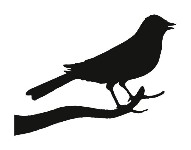 stockillustraties, clipart, cartoons en iconen met silhouet van een vogel - neerstrijken