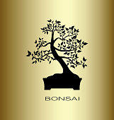 Silhouette of a bonsai tree