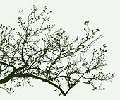 Vector image of silhouette of tree branches in the spring time.