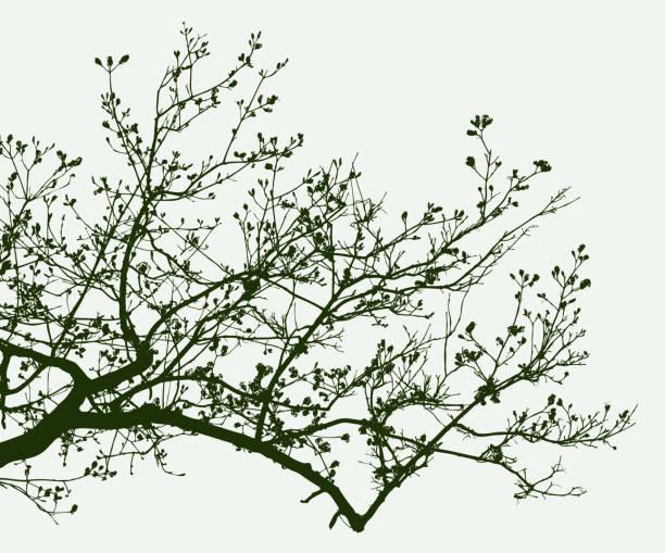 sylwetka gałęzi drzewa owocowego na wiosnę - gałąź część rośliny stock illustrations