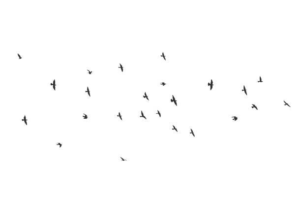 silhouette of a flock of flying birds vector art illustration