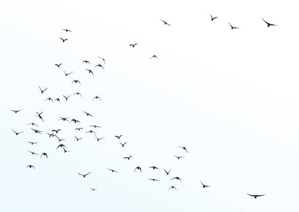 silhouette of a flock of flying birds silhouette of a flock of flying birds bird stock illustrations