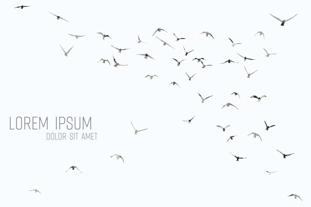 silhouette of a flock of flying birds silhouette of a flock of flying birds flock of birds stock illustrations