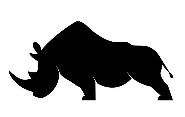 Silhouette of a rhinoceros Silhouette of a rhino in a threatening position on a white background rhinoceros stock illustrations