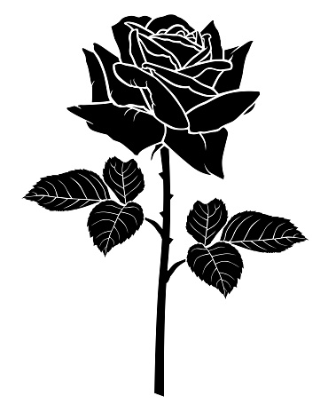 Silhouette of a rose flower