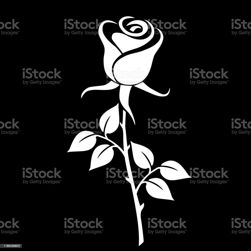 Silhouette of a rose on a black background. A beautiful white rose....