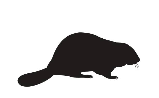 silhouette of a sitting beaver vector silhouette of a sitting beaver beaver stock illustrations