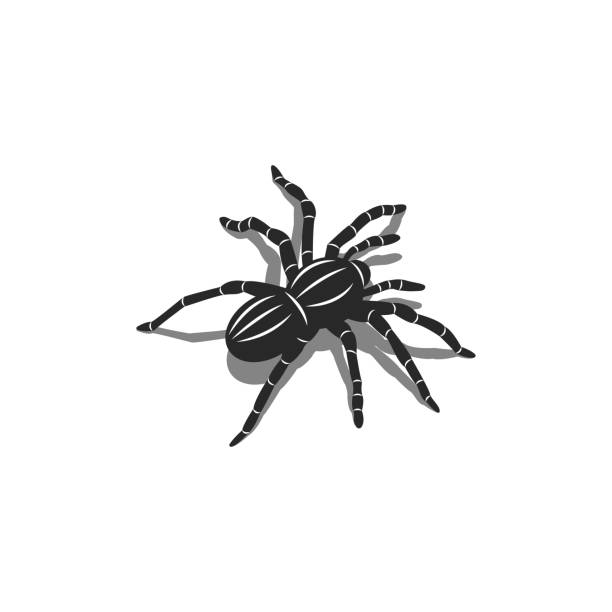 silhouette of a spider tarantula insect in isometric shape with shadows, 3d tattoo design - tarantula stock illustrations