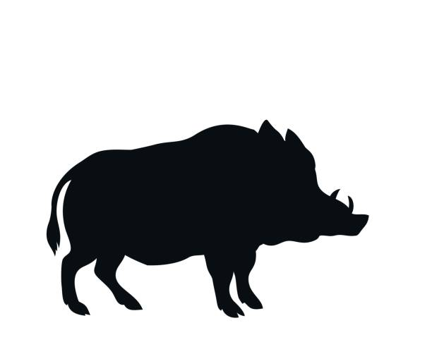 Best Wild Boar Illustrations Royalty Free Vector Graphics