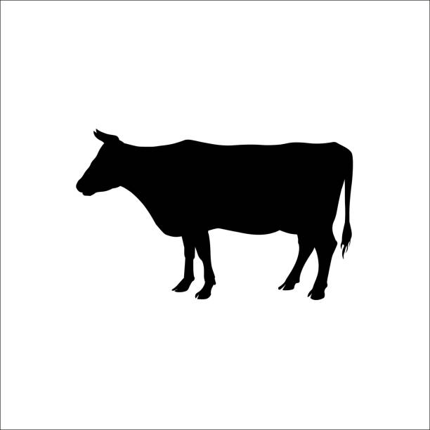 Silhouette of a standing cow Silhouette of a standing cow. Side view. Vector illustration isolated on white background domestic cattle stock illustrations