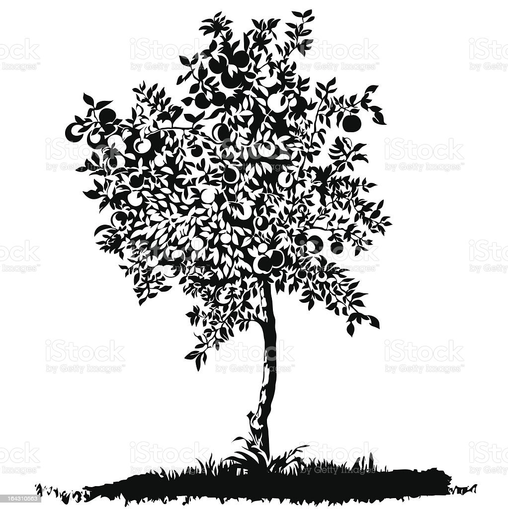 Silhouette of a young apple tree vector art illustration