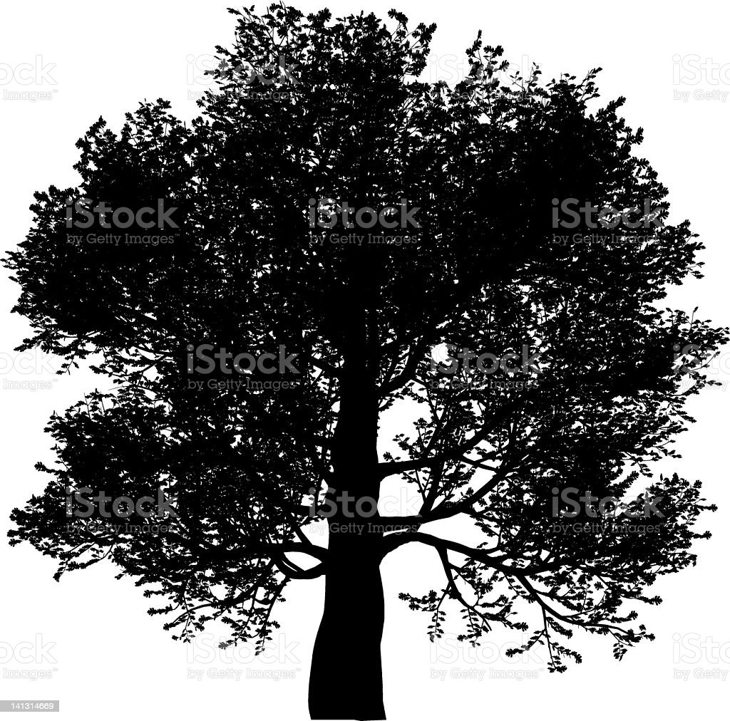 Silhouette of an oak tree on a white background royalty-free stock vector art
