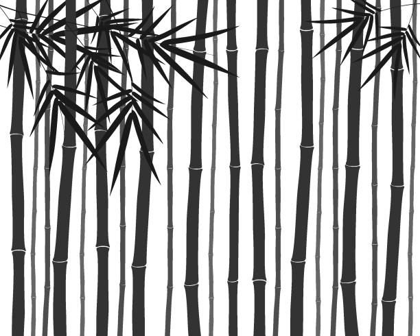 Silhouette of bamboo forest Silhouette of bamboo forest back lit stock illustrations